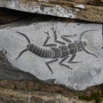 stone scorpion