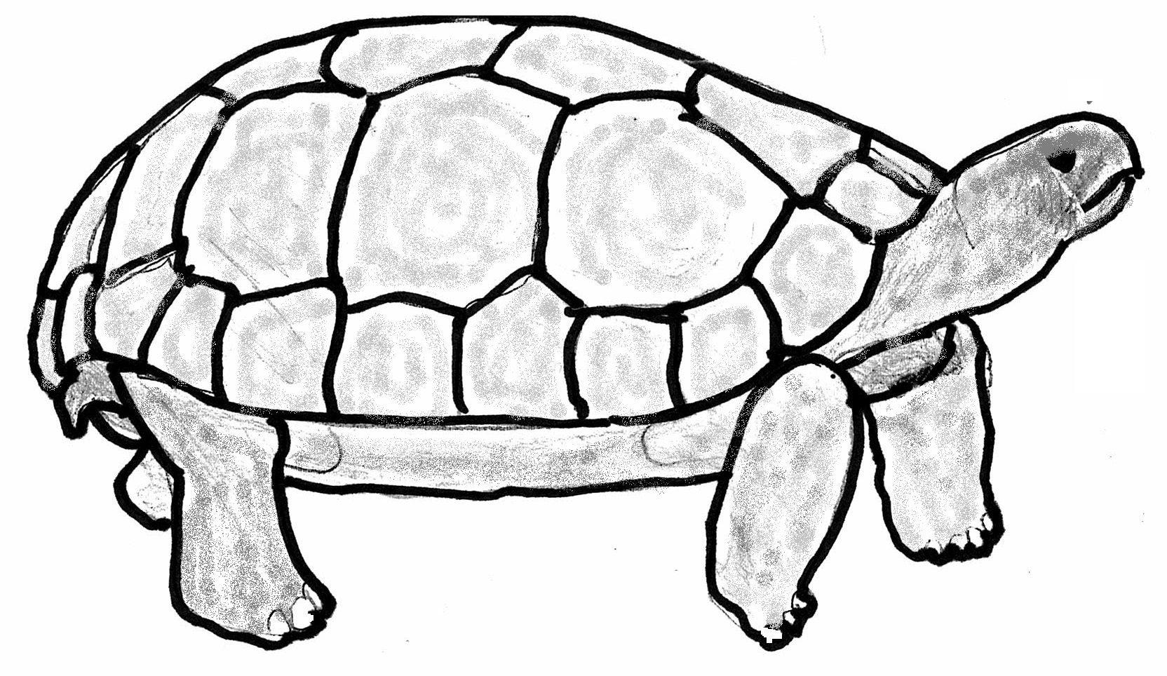 tortoise ignore friends argue