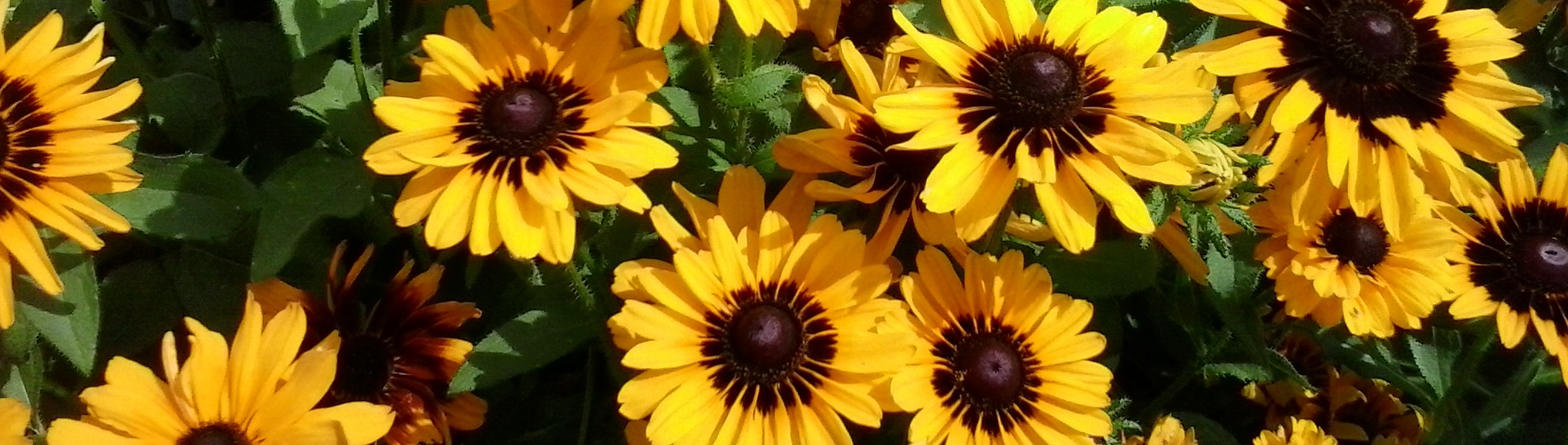 Sunny flowers to cheer you up
