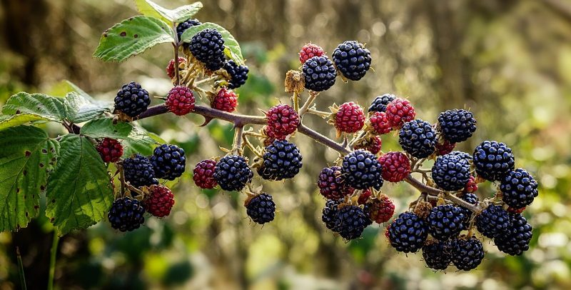 blackberries give ideas for maintaining good relationships